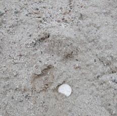 Image of Playground Sand